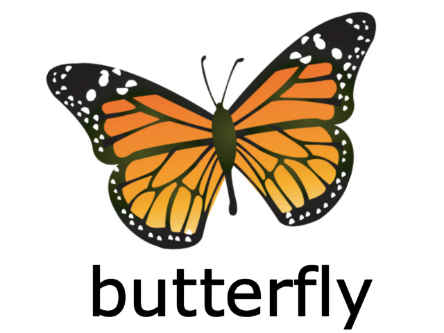 File:Butterfly on Color Flashcards