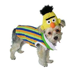 14) Hot dog  sc 1 st  HelloGiggles & 20 adorable ways to embarrass your pet this Halloween - HelloGiggles