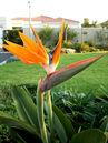 Bird+of+Paradise+flower-4079.jpg