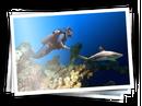 Ajira-nadando.png