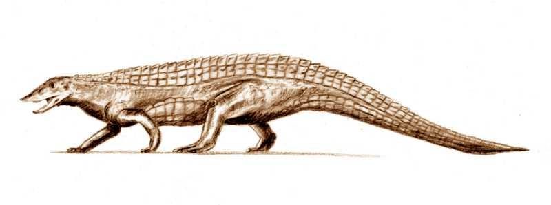 Sokotosuchus