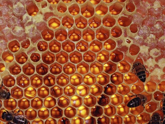 File:Honeycomb.jpg