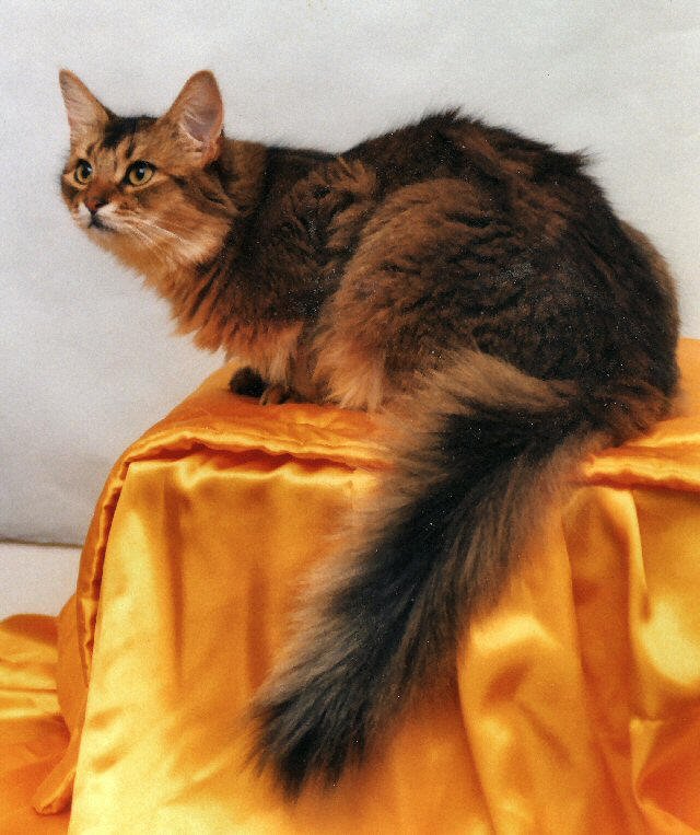 Somali Dogs And Cats Wiki