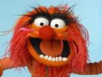 TF1-MuppetsTV-PhotoGallery-43-Animal