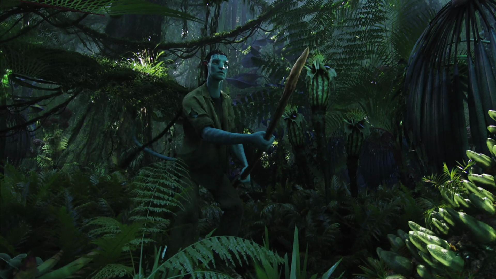 Alone In The Jungle Essay