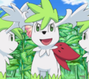 Shaymin (Pokémon)