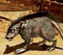 Rato womp