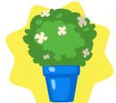 Blooming Bush