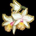 Orchids White-icon