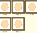 Face Shape Types