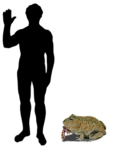 Beelzebufo_size.png