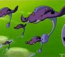 Buzzrays