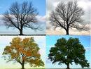 Four Seasons - Longbridge Road.jpg