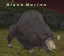 Black Merino