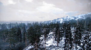 Rdr tall trees00
