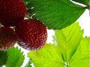 Strawberry times....jpg