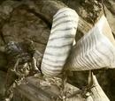 Cuerno de Guerra Locust