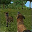 Hyena 1.jpg