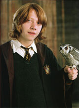 Ron-and-his-owl