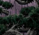 Fa elem: Erdők születése