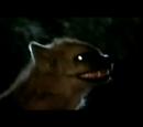 DW: Cave Hyaena