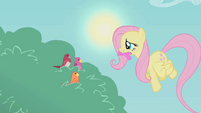 Fluttershy brings worms for the birds S1E07