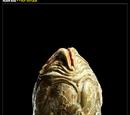 Alien - Predator: Collectables