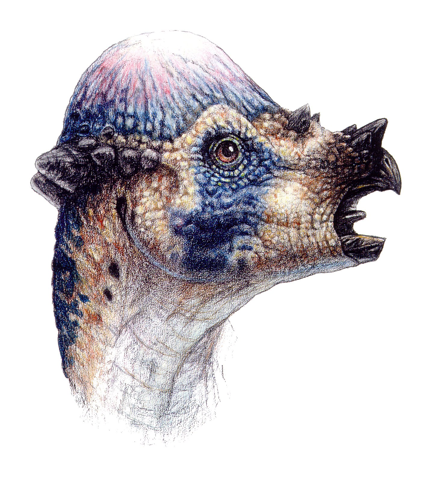 Pachycephalosaurus - Jurassic Park Wiki Pachycephalosaurus Head
