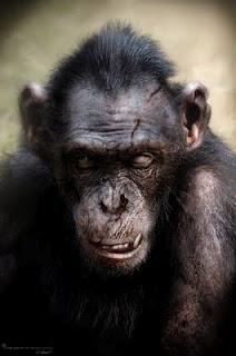 Image - KOBA-V (3).jpg - Planet of the Apes: The Sacred ...