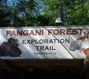 Pangani Forest Exploration Trails