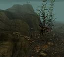 Skyrim: Höhlen
