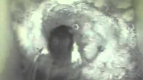 Black-capped Chickadee hatching