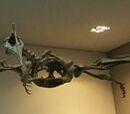 Птерозавры мелового периода
