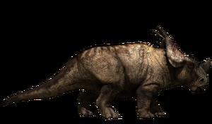 pachyrhinosaurus skull  Pachyrhinosaurus