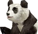 Ошейник панды