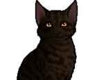 ThunderClan cat