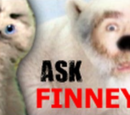 Ask Finney Episodes