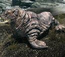 Существа Морровинда
