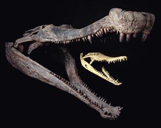 Sarcosuchus.jpg