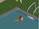 Swimming pool.PNG