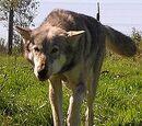 Wiki Reino Animalia/Contenido destacado