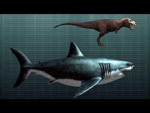 The-Nightmarish-Megalodon-Sharkzilla-Shark-Week-2012.jpg