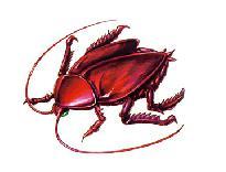 Roach1.jpg