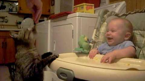 Cat Snack Makes Baby Laugh (WyattsMommy85)