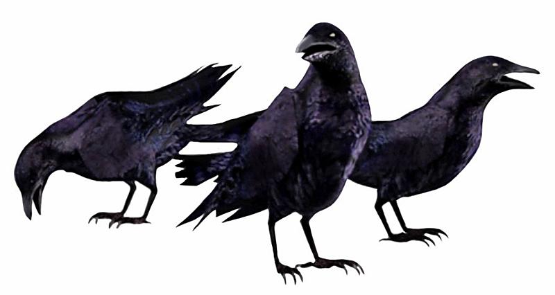Evil crow - photo#18