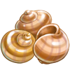 Ingredient-Escargot