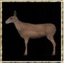 Female Deer.jpg