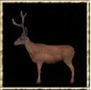 Male Deer.jpg