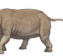 Dinocerata