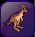 Kangaroo box.png